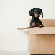Clutter-Busting: Eight Tips for Preparing for a Real (or Virtual) Move.