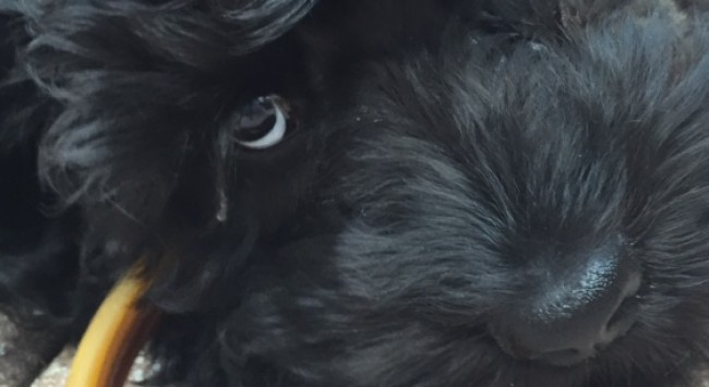 7 Things I Learned About Myself, from Getting a Dog.