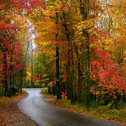 """""""The Colour of the Leaves in Autumn Would Be Nothing Without the Feeling that Accompanies It."""""""