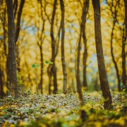 A Little Happier: What's the Best Time to Plant a Tree?