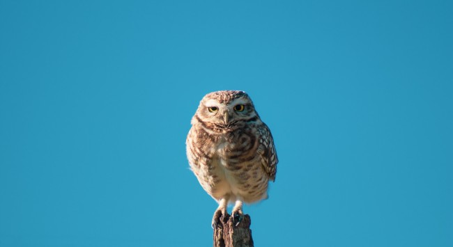 Are You A Lark Or An Owl? Weigh In.